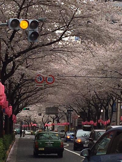 桜の撮り方失敗例1
